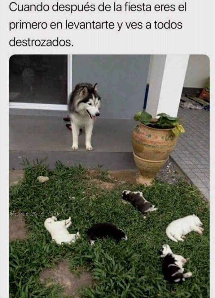 Que hermosos perritos - meme