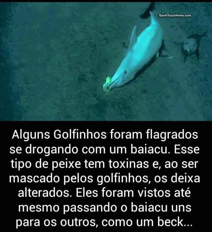 Resultado de imagem para Golfinhos se drogando Fotos
