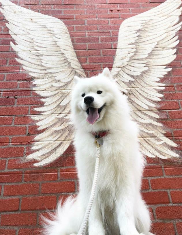An Angel got their wings - meme