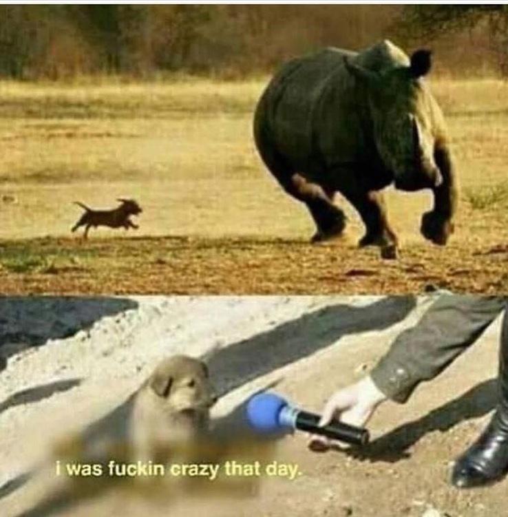 best dog ever - meme