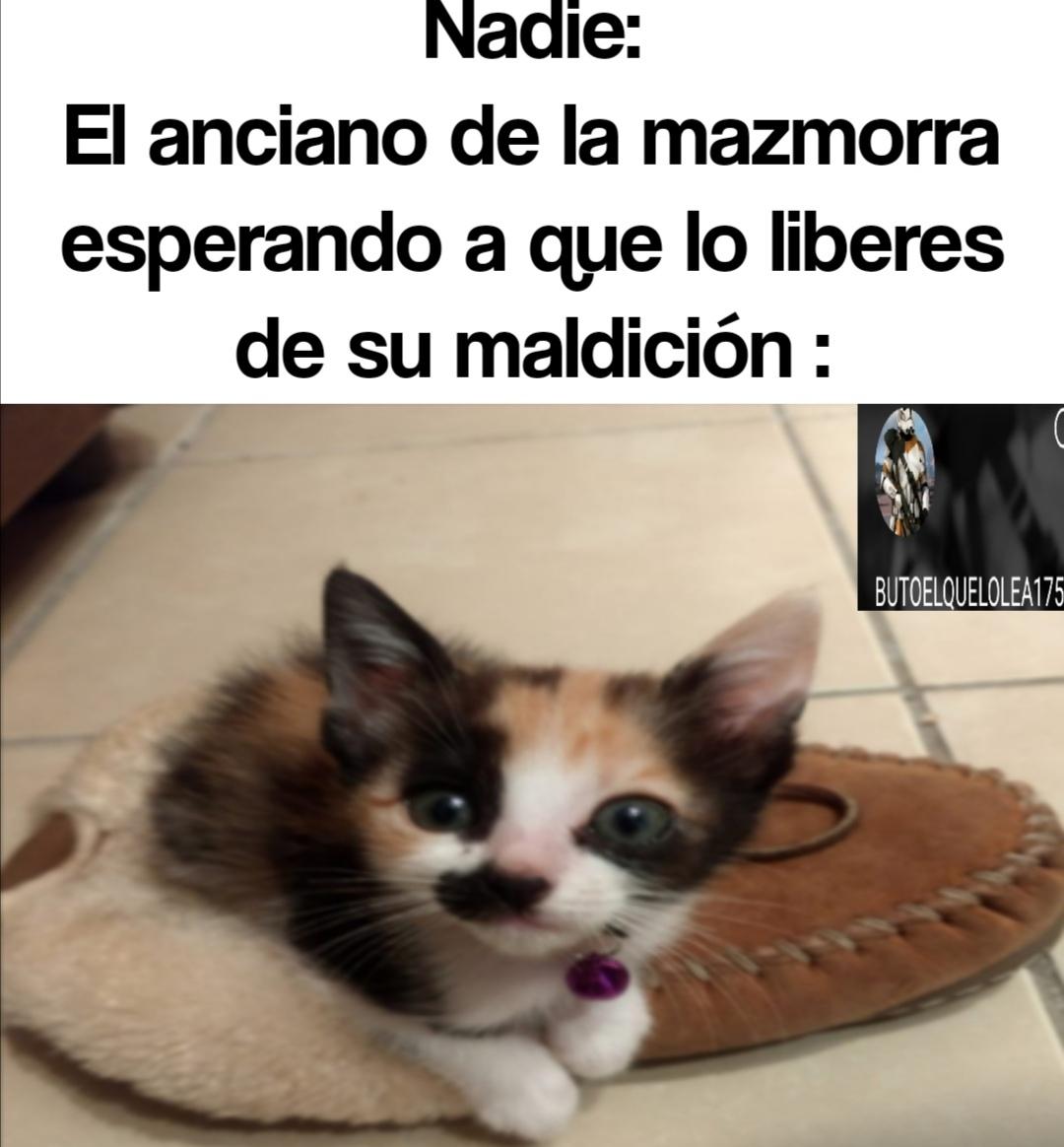 Terraria meme awww que lindo gatito :socute: