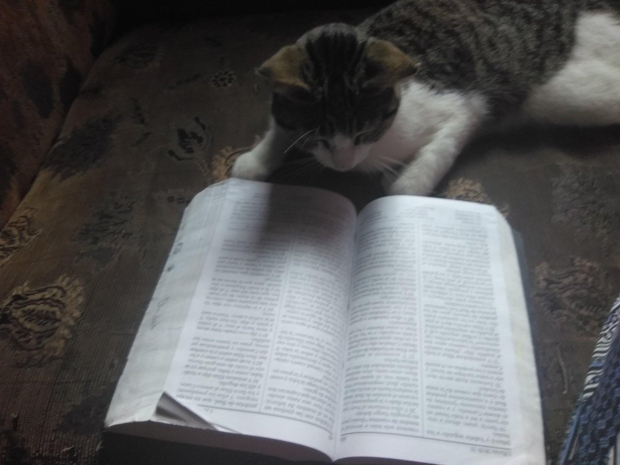 Gato Leyendo la Biblia - meme