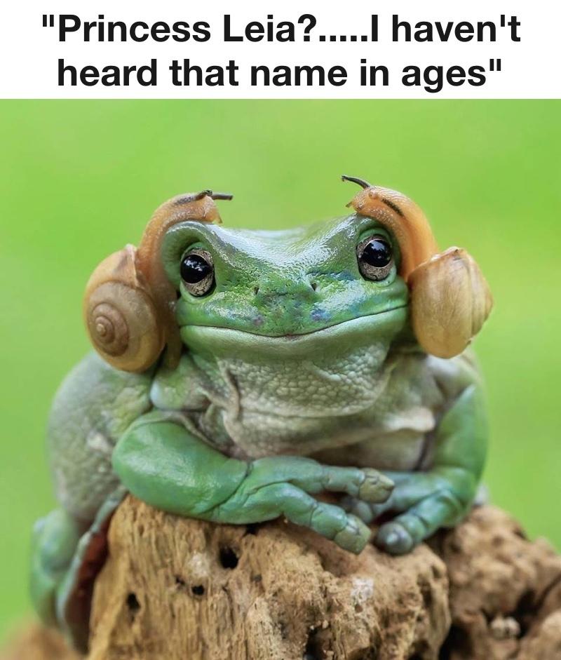 The best frog memes :) Memedroid