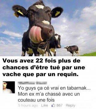Vache - meme