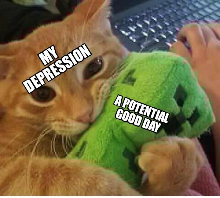 My cat gave me a meme format