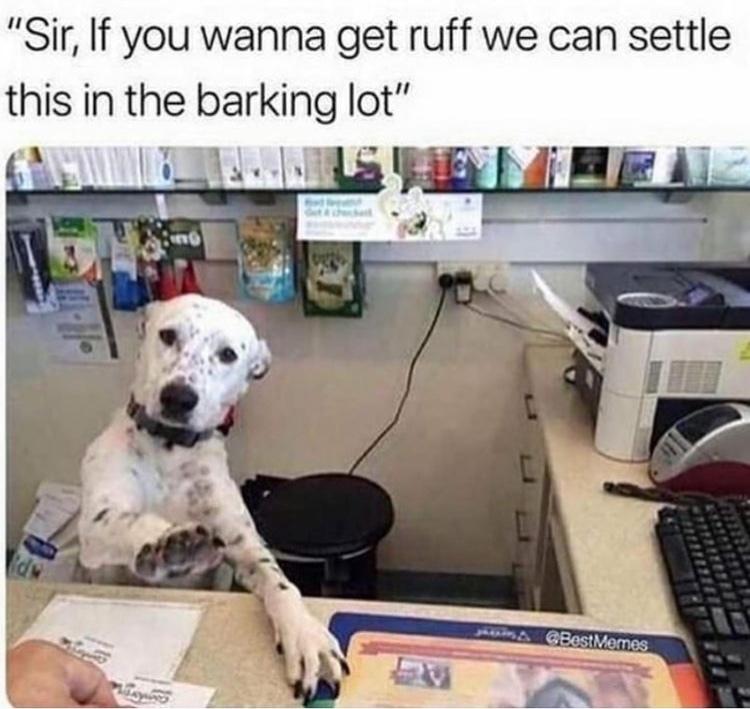 you're barking up the wrong tree bitch - meme