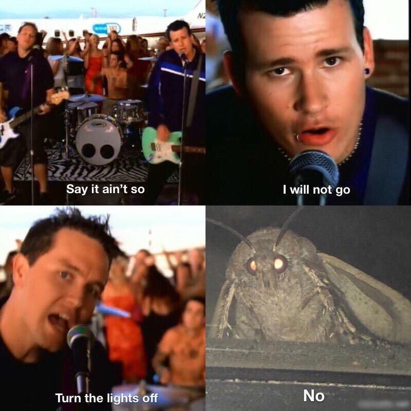 mothsssss - meme