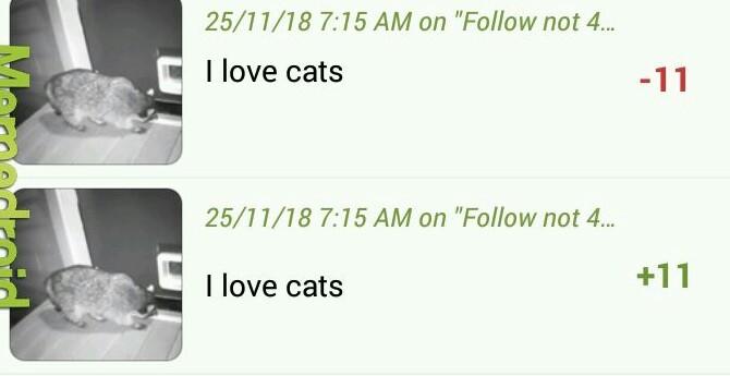 I really do love cats - meme