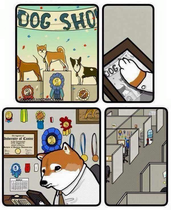 its ok doge - meme