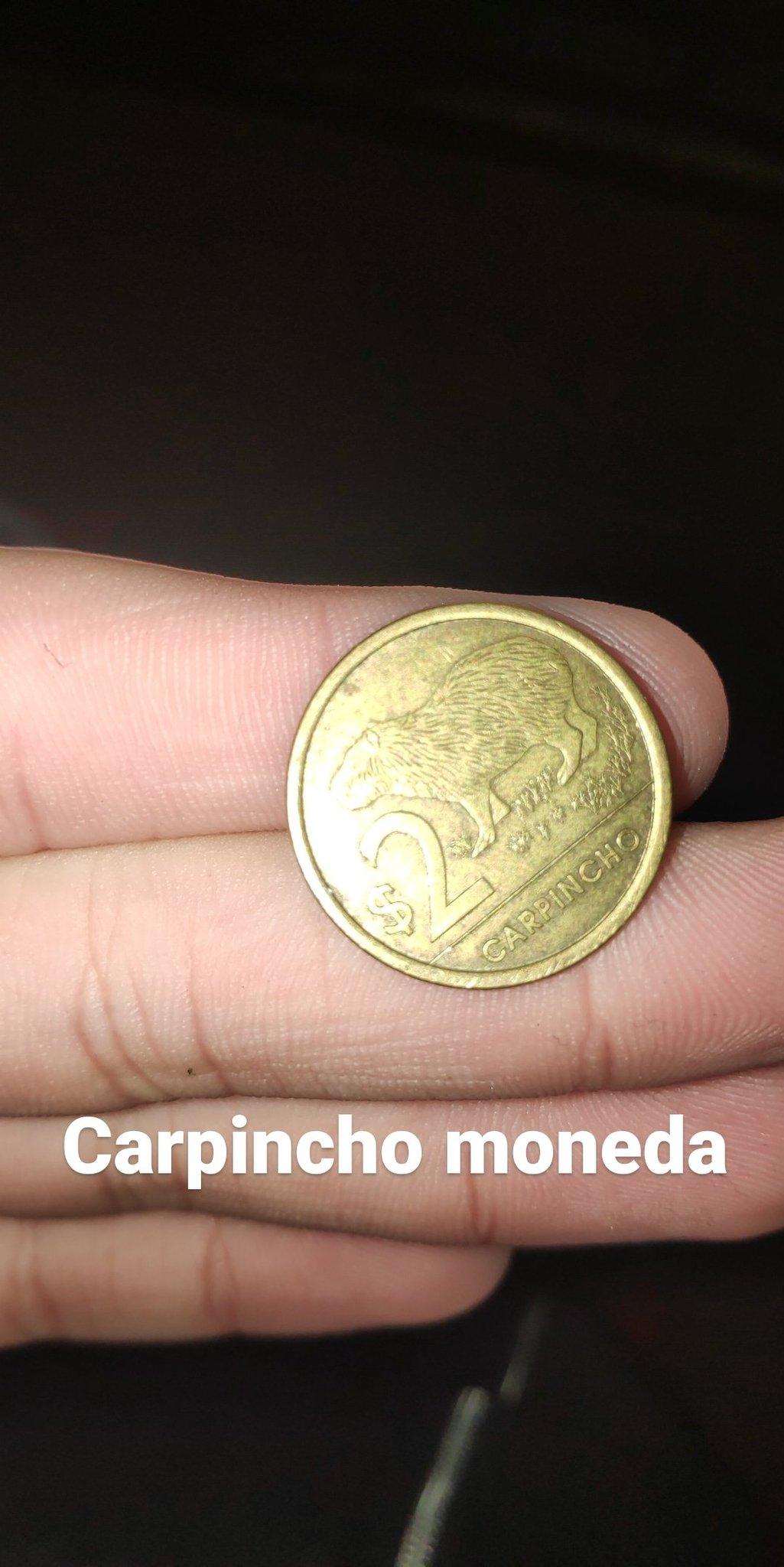 Carpincho moneda - meme