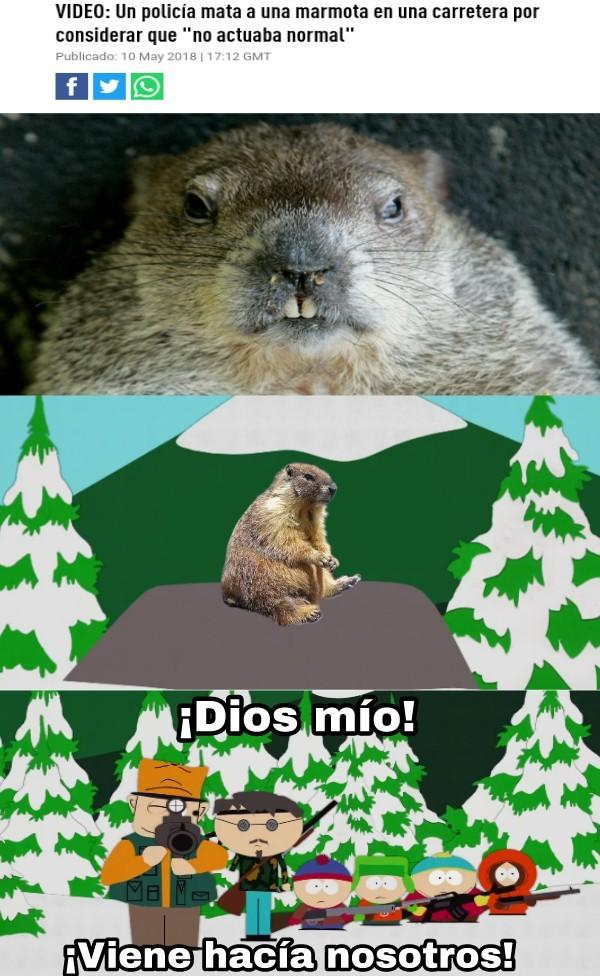 Dé seguro era una marmota terrorista - meme