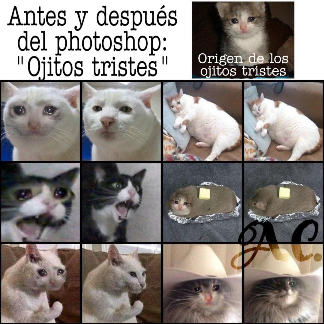 Gatos :v - meme
