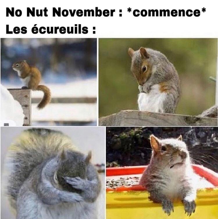 allez y dites squirrel avec votre meilleur accent - meme