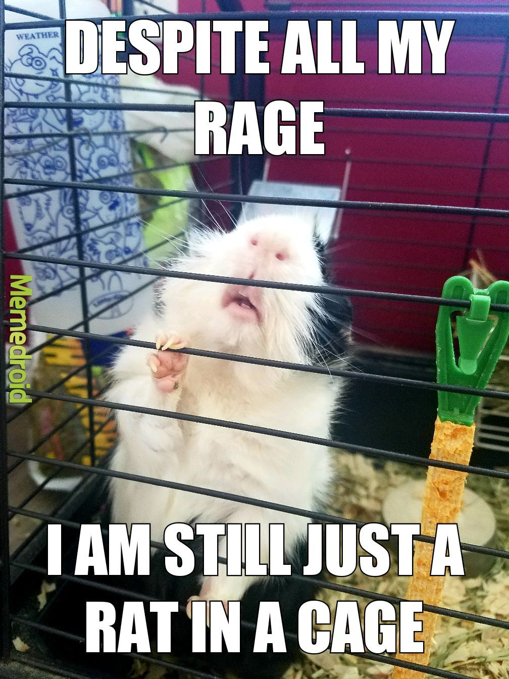 just a rat in a cage - meme