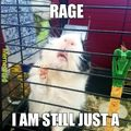 just a rat in a cage