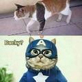 Quien diablos es Bucky