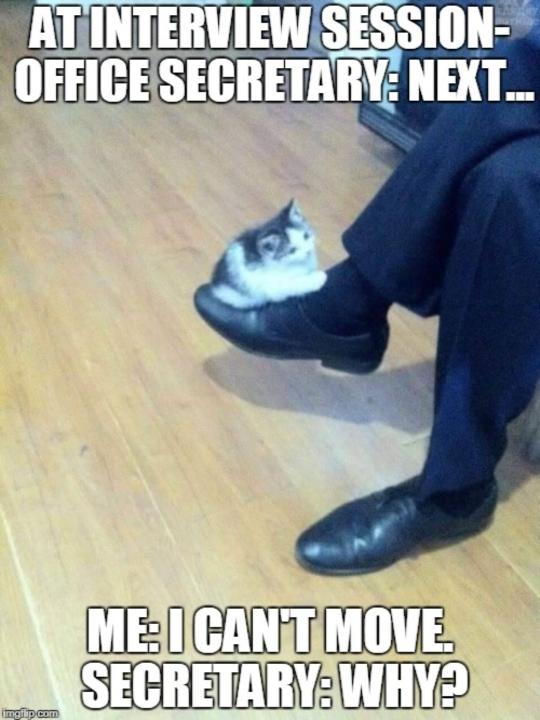 miew - meme