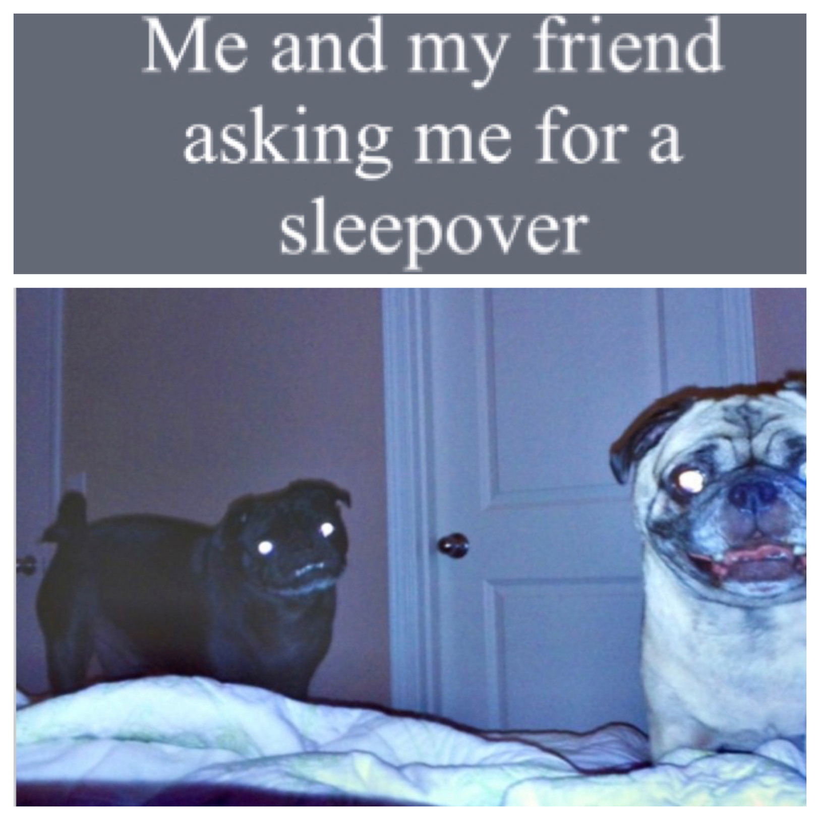 Be polite when asking for a sleepover - meme
