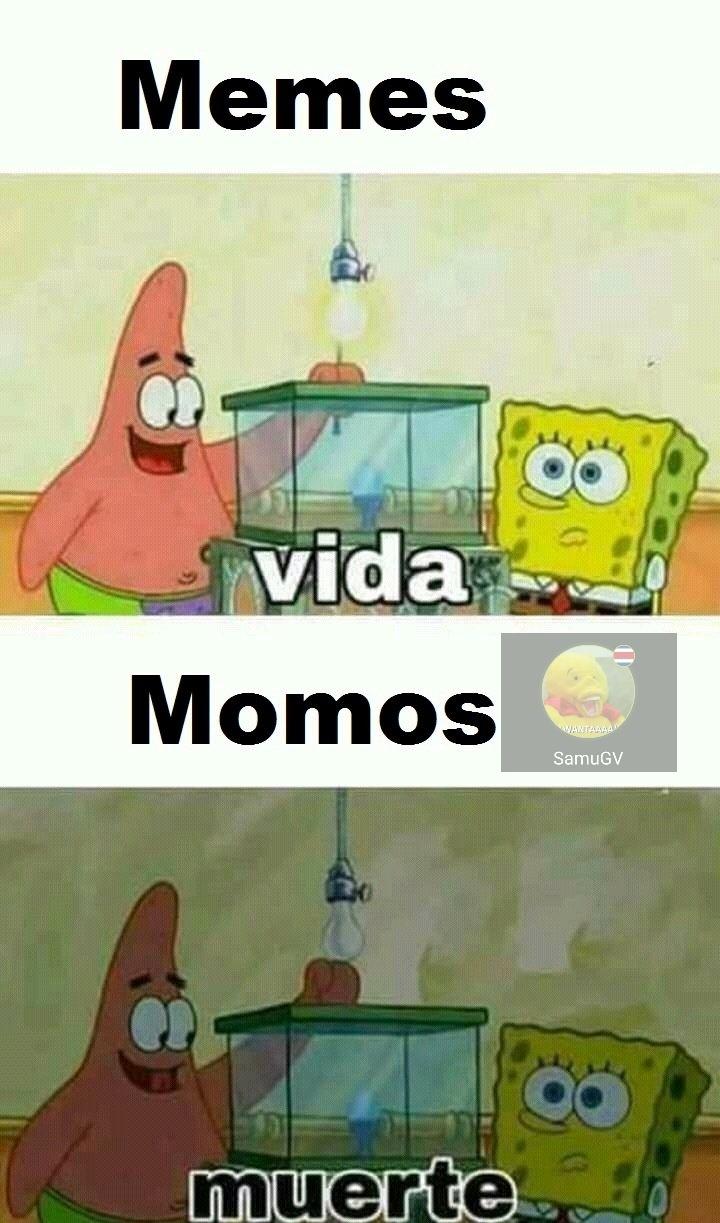 Se dice memes !!