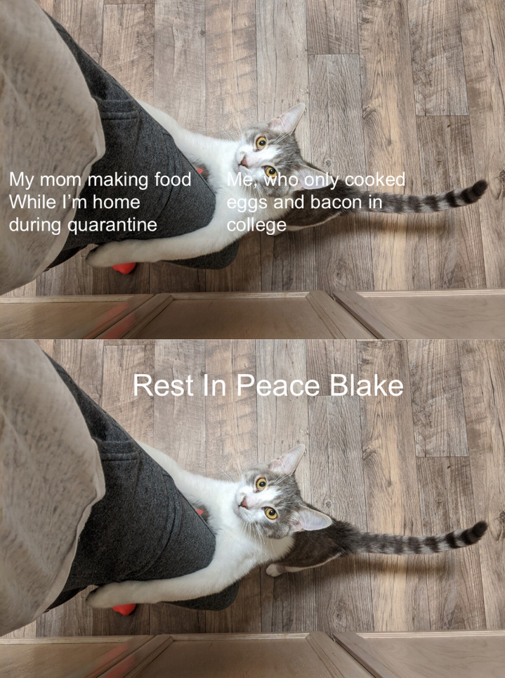 Sorry for your cat dude, I know in my heart he was a good catto - meme