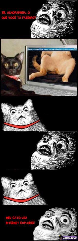Poha gato - meme