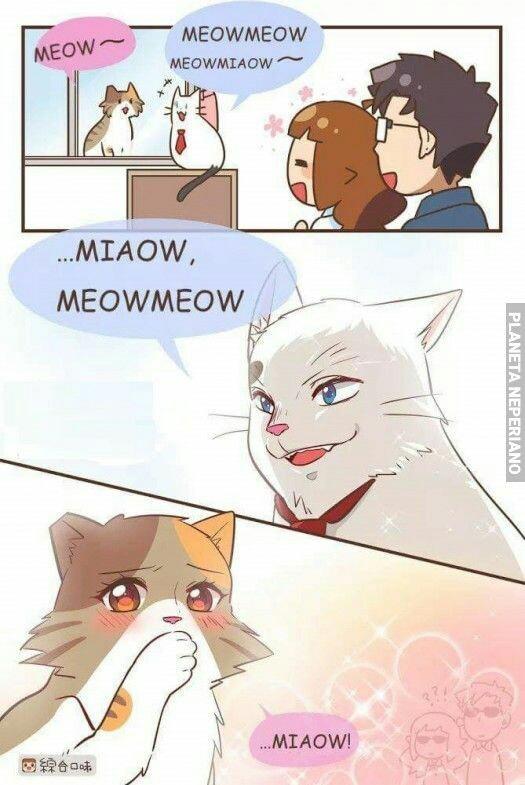 Estos gatos - meme