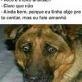 Cachorro ansioso
