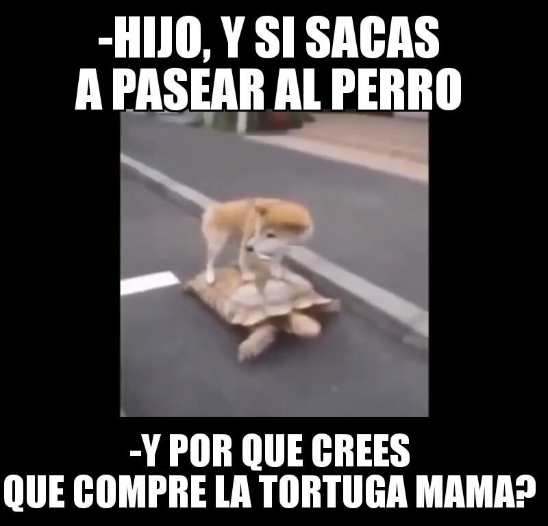 Swag dog - meme