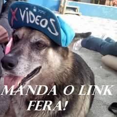 meu cachorro ta pedindo o link,alguem? - meme