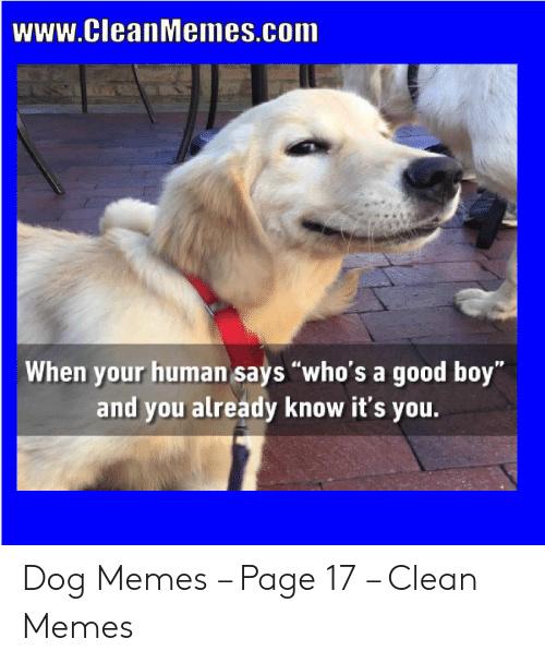 Look at this DOG - meme