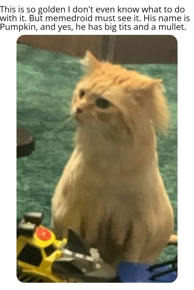 Cat with big tits and a mullet - meme