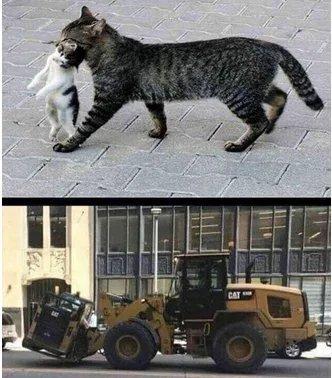 Mama cat n kitten CAT - meme