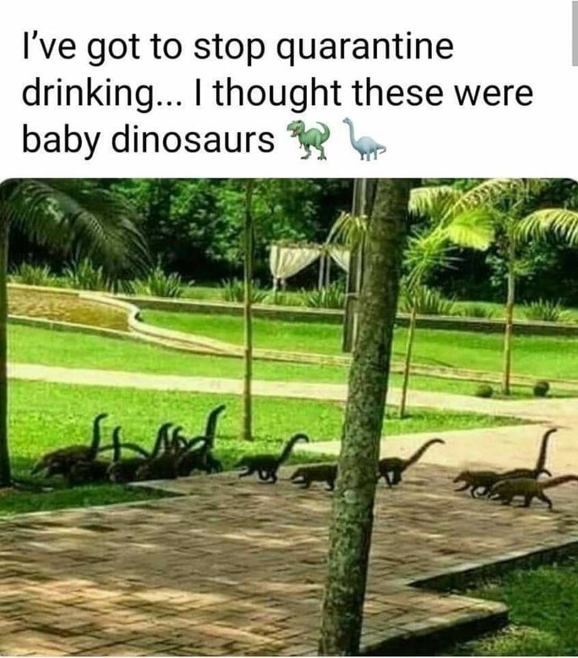 I thought they are too at first and I wasn't even drinking - meme