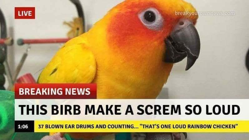 LAWD BIRB - meme