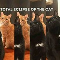 Cat eclipse