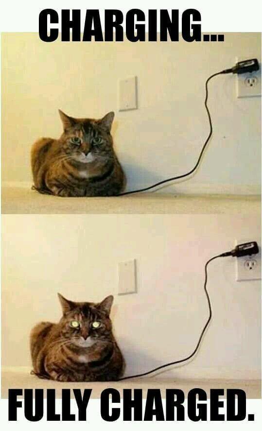 Charging cat - meme
