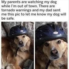 Safety Dog - meme