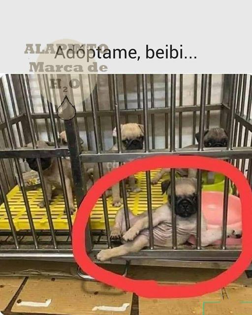 ADOPTAME BEIBI - meme
