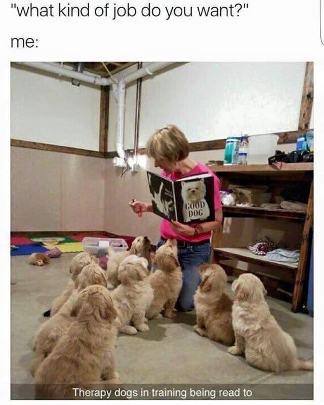 Dogs are so cute - meme