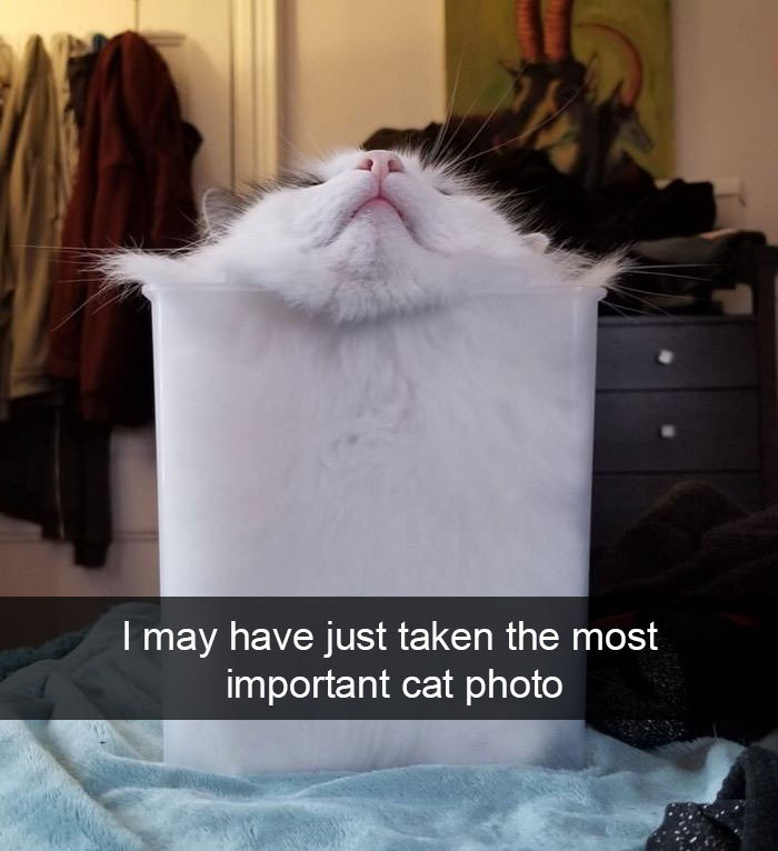 Coot - meme