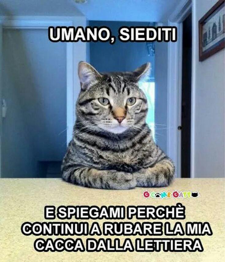 Gatto furbo - meme