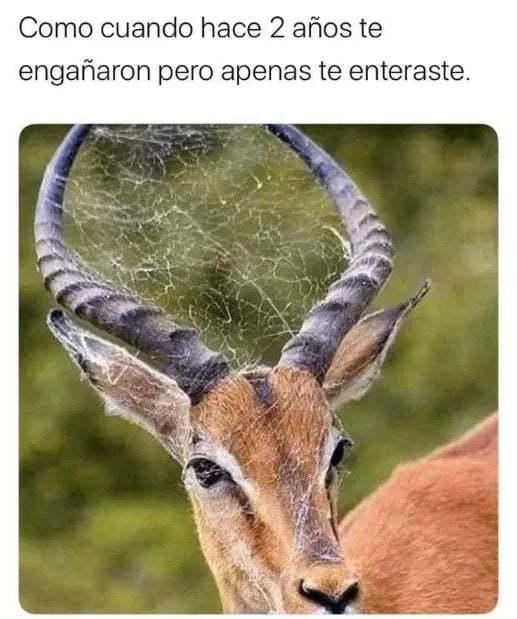 cuernudo - meme