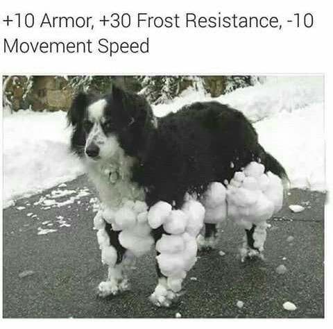 chien combattant ou pas?