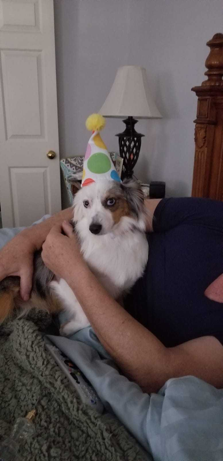 This ain't a meme but can we have a happy birthday for my dog?