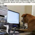 (Tutubarão) Catiorro programador