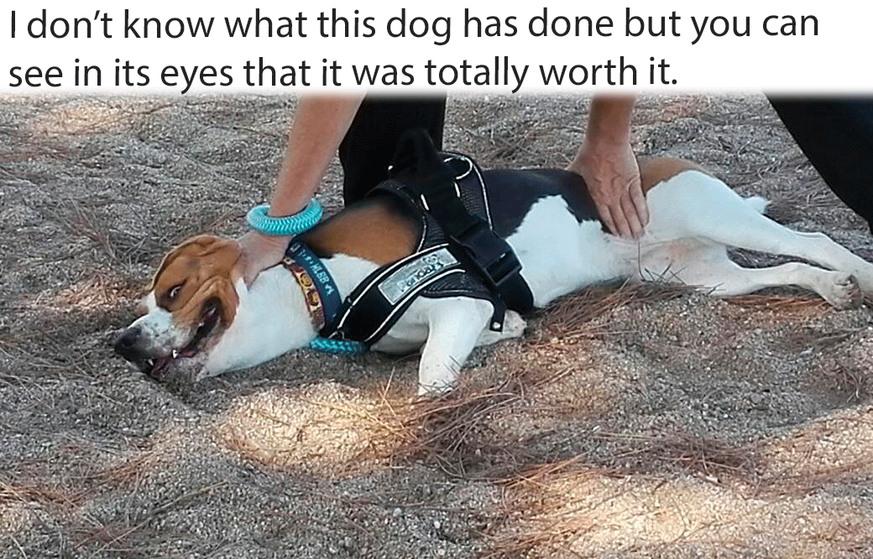 This dog crazy af - meme