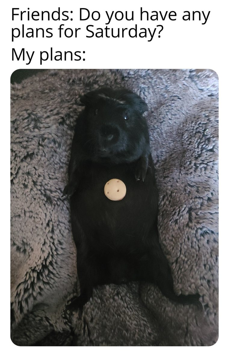 Guinea pig's name is Fatty - meme