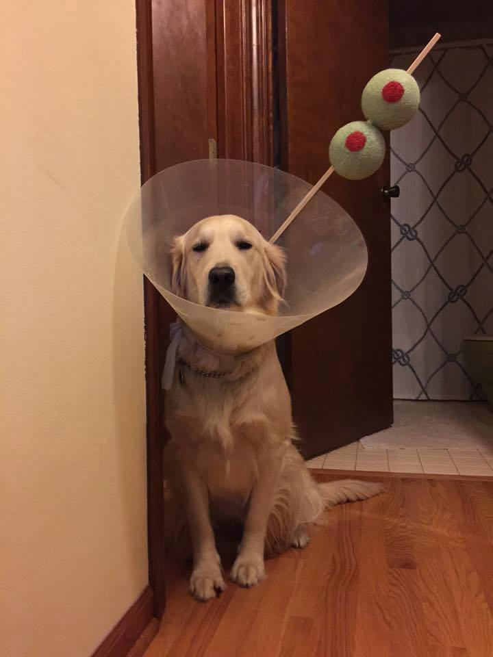 Martini dog is not amused - meme