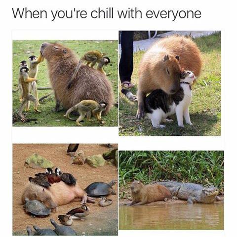 Awuebo :v - meme