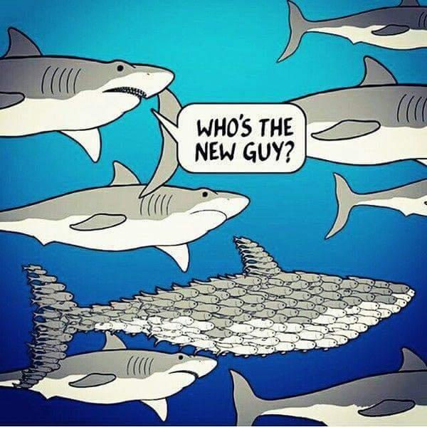 Somethings fishy here - meme